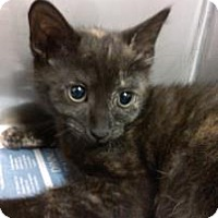Adopt A Pet :: Samantha - Miami, FL
