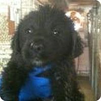 Adopt A Pet :: Barney - Denver, CO