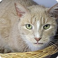 Adopt A Pet :: Mr. Buffington - Chicago, IL