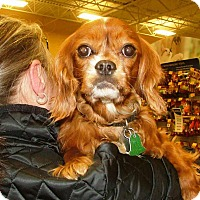 Adopt A Pet :: Tito - Rochester, NY