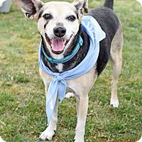 Adopt A Pet :: Ms. Penny - Marietta, GA