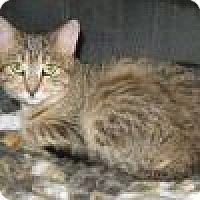 Adopt A Pet :: Vereau - Powell, OH