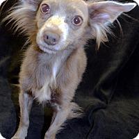 Adopt A Pet :: Griffin - Bridgeton, MO