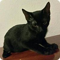 Adopt A Pet :: Leo - Spring, TX