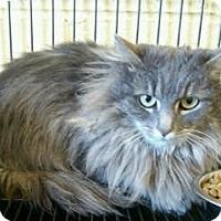 Adopt A Pet :: Irma - Albany, NY