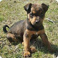 Adopt A Pet :: Bo - Danbury, CT