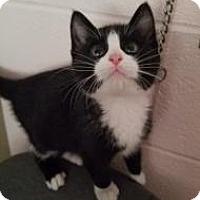 Adopt A Pet :: Aristocat - Gadsden, AL