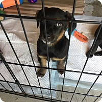 Adopt A Pet :: Ethanial - Frederick, MD