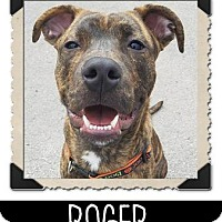 Adopt A Pet :: Roger - West Allis, WI