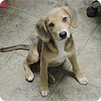 Adopt A Pet :: Piper - Cottonport, LA