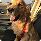 Adopt A Pet :: Sahara