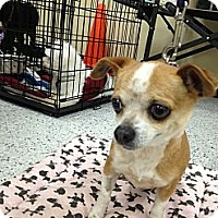 Adopt A Pet :: Little Chloe - Van Nuys, CA