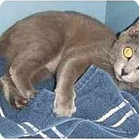 Adopt A Pet :: Sable - Lake Charles, LA