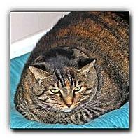 Adopt A Pet :: Kate - Howell, MI