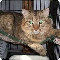 Adopt A Pet :: Cooney - Portland, ME