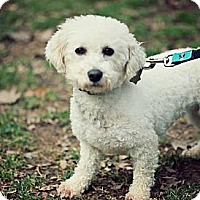 Adopt A Pet :: Professor - South Amboy, NJ