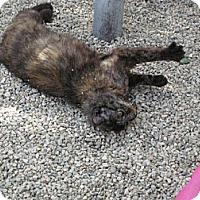 Adopt A Pet :: Nova - Sherman Oaks, CA