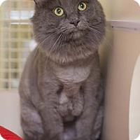 Adopt A Pet :: Duffy - Merrifield, VA