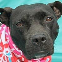 Adopt A Pet :: Raven - New Roads, LA