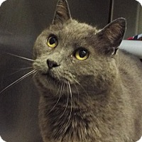 Adopt A Pet :: Rosemary - Grants Pass, OR