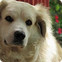 Adopt A Pet :: Callie - Kiowa, OK