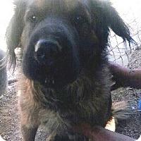 Adopt A Pet :: Baxter - Las Vegas, NV
