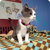 Adopt A Pet :: Sarafina - Murphysboro, IL