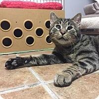 Adopt A Pet :: Smalls - New York, NY