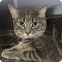 Adopt A Pet :: Mindy 2 - Los Alamitos, CA