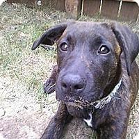 Adopt A Pet :: Raven - Grand Rapids, MI