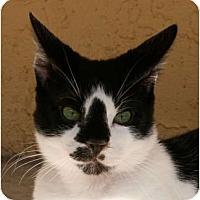 Adopt A Pet :: Emilio - Naples, FL