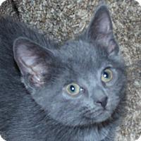 Adopt A Pet :: Juvia - Calgary, AB
