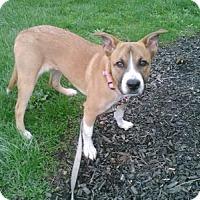 Adopt A Pet :: Gertie - Dublin, OH