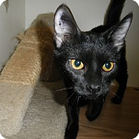 Adopt A Pet :: Breezy - Milwaukee, WI
