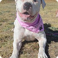 Adopt A Pet :: Jasmine - Aurora, CO
