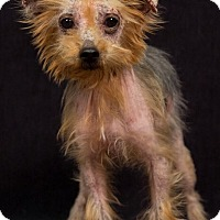 Adopt A Pet :: Promise - Beechgrove, TN