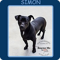 Adopt A Pet :: SIMON - Dallas, NC