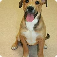 Adopt A Pet :: Nugget - Lufkin, TX