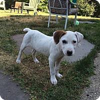 Adopt A Pet :: Axel - Shrewsbury, NJ