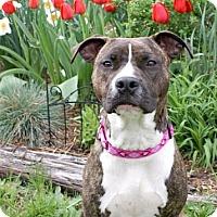 Adopt A Pet :: Ruby - Framingham, MA