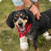 Adopt A Pet :: Shrek - RESCUED! - Zanesville, OH