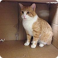 Adopt A Pet :: Felix - Larned, KS