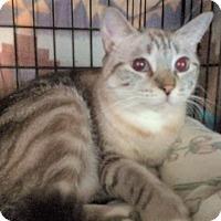 Adopt A Pet :: Miss Lindsey - Cocoa, FL