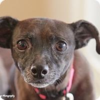 Adopt A Pet :: Smokey - Homewood, AL