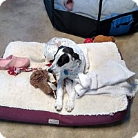 Adopt A Pet :: Eden - Colmar, PA