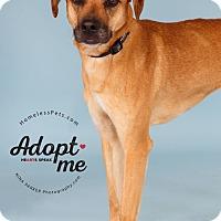 Adopt A Pet :: Belle - Marietta, GA