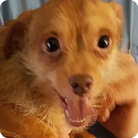 Adopt A Pet :: Sneezy - Colonial Heights, VA