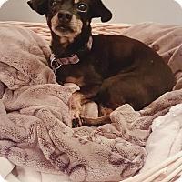 Adopt A Pet :: Teeny 3314 - Toronto, ON