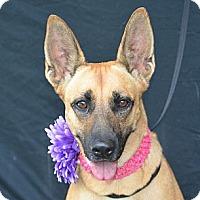 Adopt A Pet :: Bonnie - Plano, TX