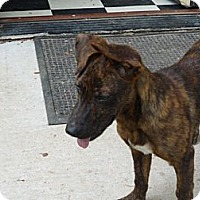 Adopt A Pet :: Tazz - Pointblank, TX